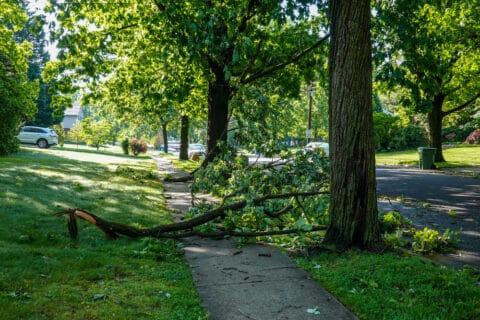 Sturzunfall eines Krankenhausbesuchers über eine Baumeinfassung auf dem Gehweg